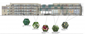 Elevation drawing of Church Grove community housing project with details of proposed planting on green facade